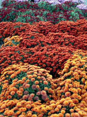 Mare di fiori №14155