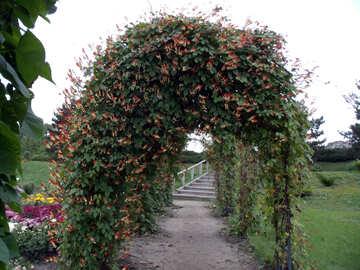 Lebende Arch №14284