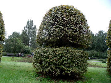 Original tree trimmed №14282