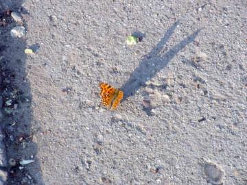 Orange butterfly №14127