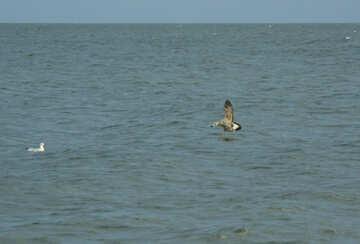 Dark Gull over wave №14444