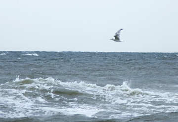 Seagull flying at wave №14452
