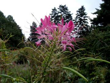 Exotic Flower №14352