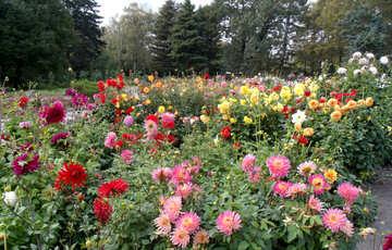 Autumn flowers №14287