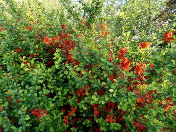 Flowering bush №14060
