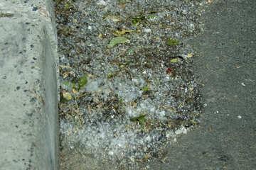 Poplar fluff  №14787
