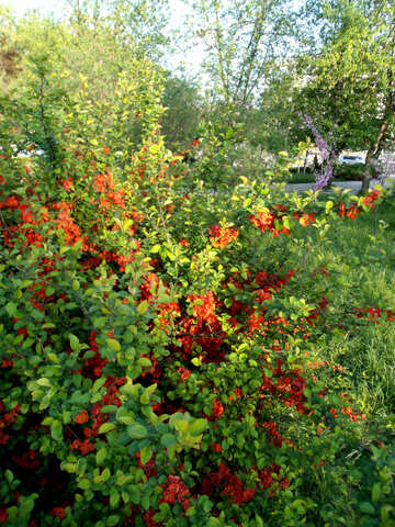 Spring flower garden №14121