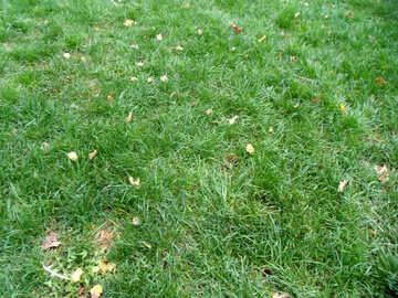 Autumn lawn №14327