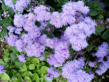Kleine Blumen №14268