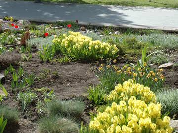 Frühling-Blumenbeet №14112