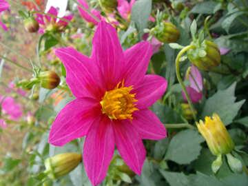 Blume №14329