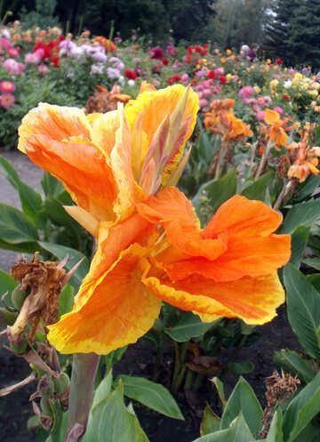 Luxury flower №14299
