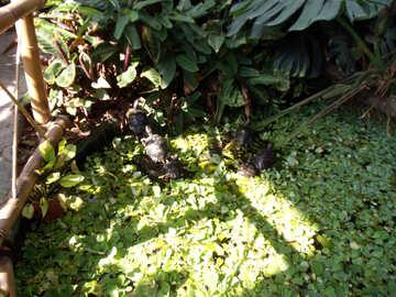 Water plants №14364