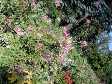 Blumen-Teppich №14369