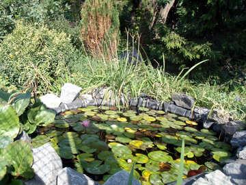 Teich mit Seerosen am Haus №14365
