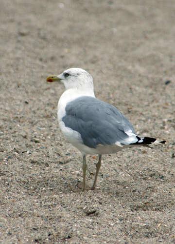 Sea bird №14395