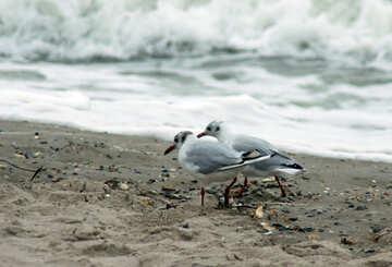 Birds at sea №14374
