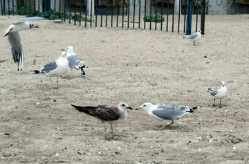 Different birds №14424