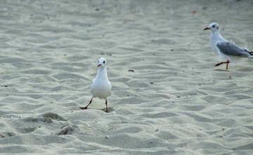 Funny seagull №14451