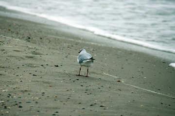 Gull behind №14432