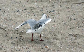 Gull-wing №14390