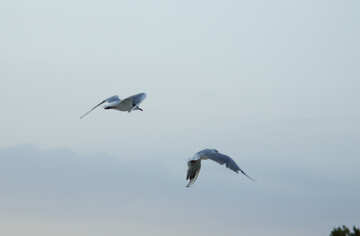 Seabirds №14391