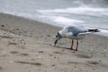Seagull on the beach №14376
