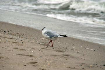 Seagull on the beach №14434