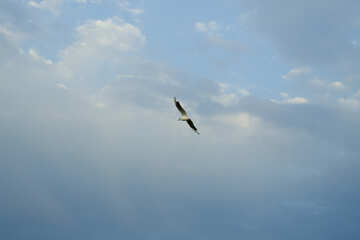 Seagull in the sky №14383