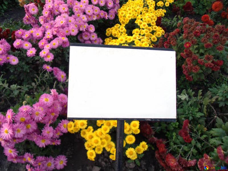 Leere Teller mit Blumen Hintergrund №14172