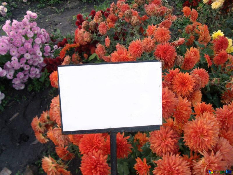 Ein Schild in den Farben des Hintergrunds №14175