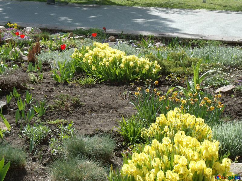 Spring flower bed №14112