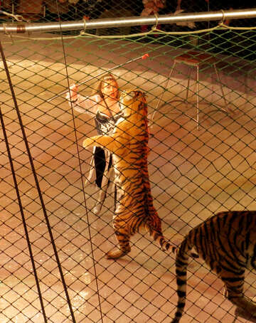 Zirkus mit tiger №15813