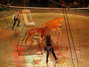 Circus big cats №15837
