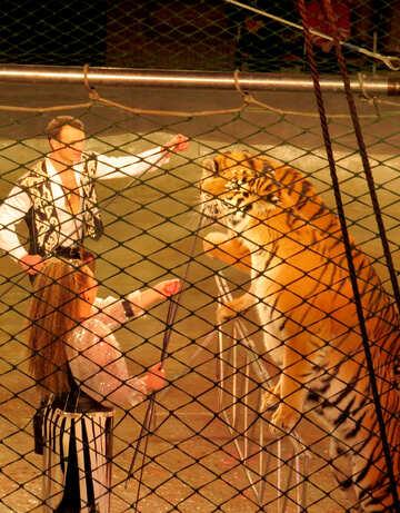 Circus Tiger №15832