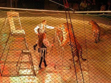 Circus and Tigers №15834