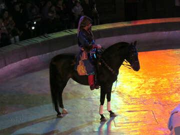 Cavallo del circo №15790