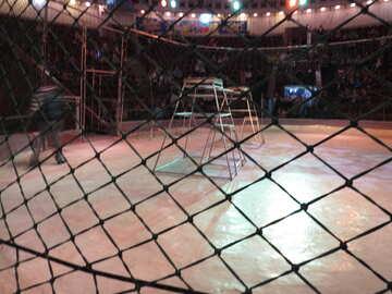 Net circus №15876