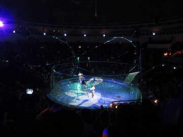 Circus show №15843
