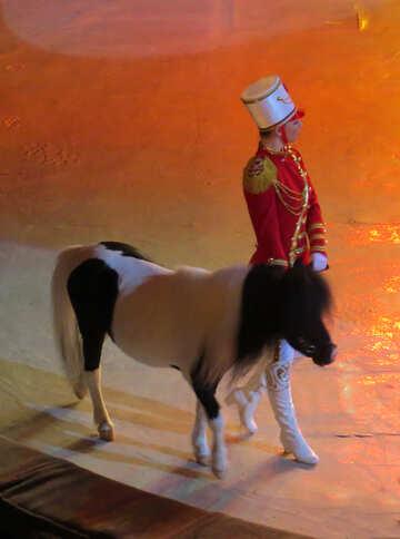 Pony de circo №15782