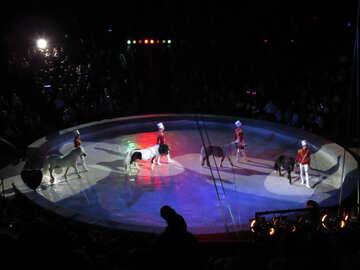 Pony circo №15784