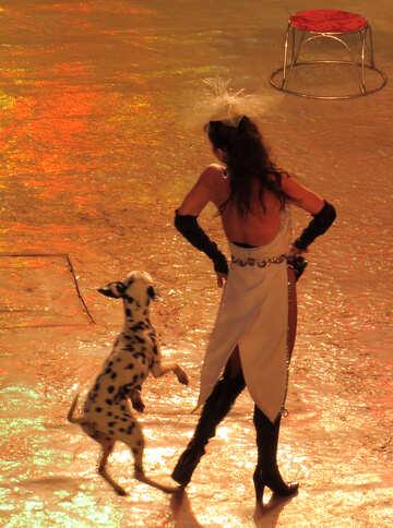 Hund tanzt №15770