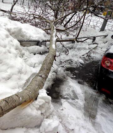 Baum fiel auf Auto №15640
