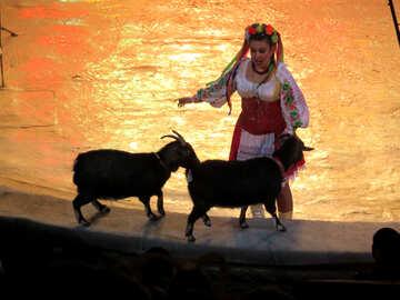 Circus goat №15756
