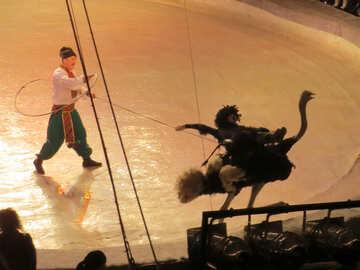 Struzzo circo №15793