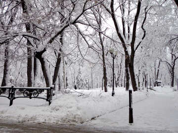 City park in winter №15602