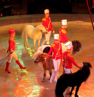Pony in the circus №15777
