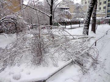 Ein Baum fiel auf dem Schnee №15641