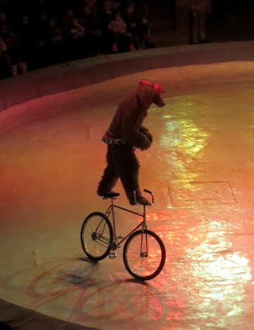 Bear on bicycle №15802