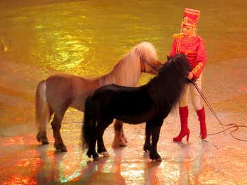 Visualizza con pony №15774